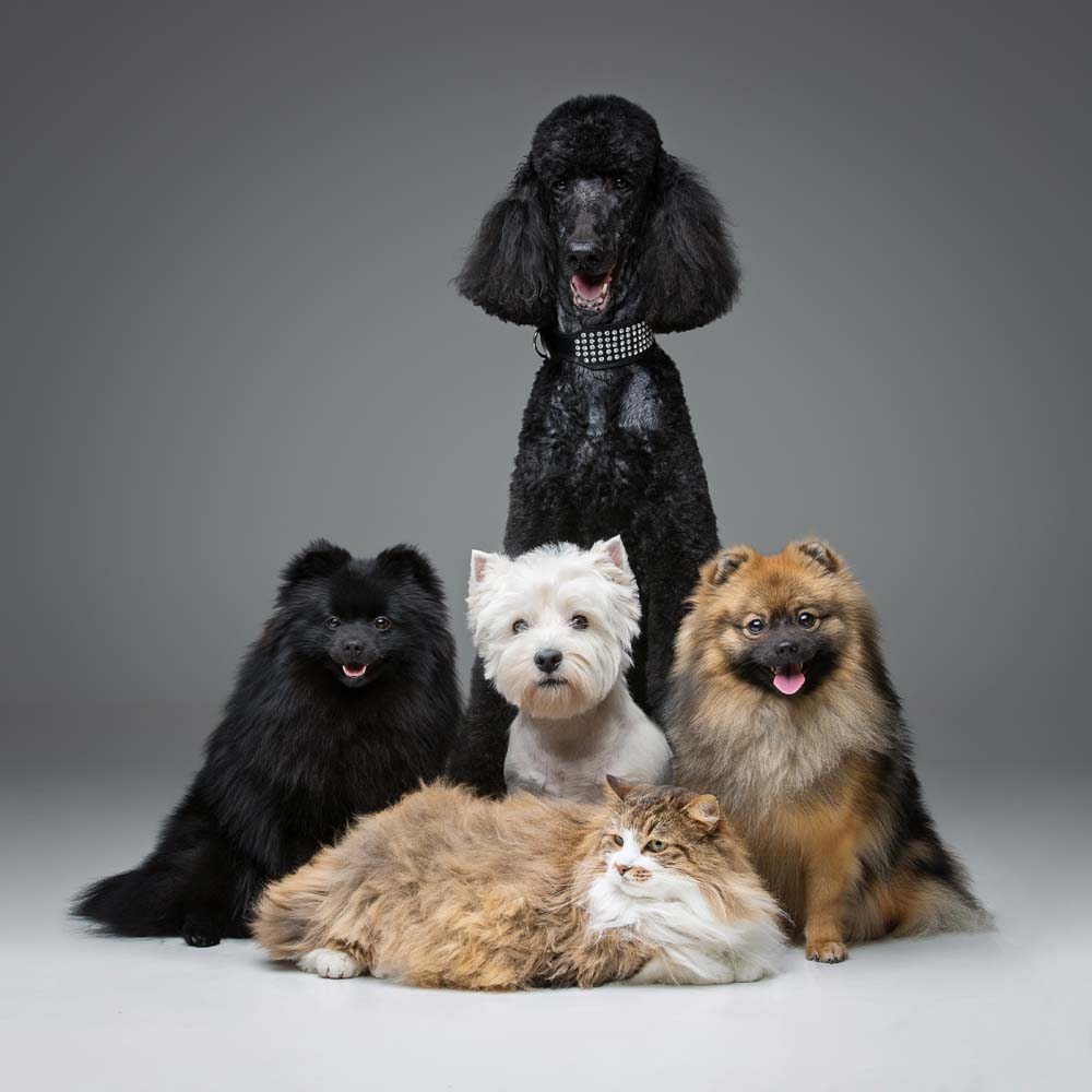 Welches Haustier?
