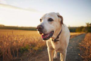 Erkrankungen beim Hund