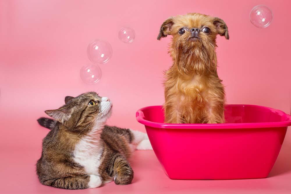 Futter für Haustiere