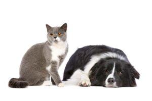 Kinder und Haustiere