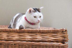 Wie alt können Katzen werden?