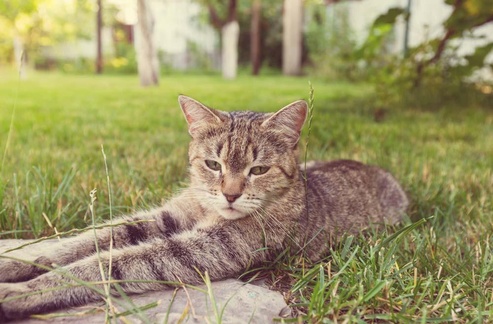 Katzen Sauberkeit